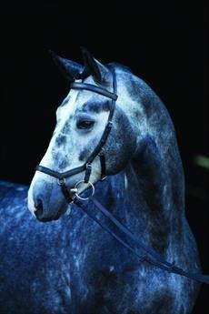 Rambo Micklem Zaumzeug ohne Zügel Braun braun Small Horse/Cob