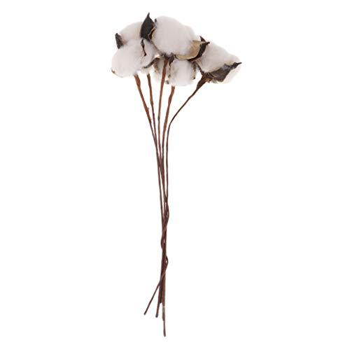 IPOTCH 5 Stück Baumwolle Stems Bauernhaus rustikale Blumenschmuck Hochzeit Herzstück Raum Ornament