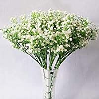 PLANTOGALLERY Gypsophila mixed Colour Flower Seeds Good Germination (1)