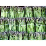 Grüner Spargel (Asparagus officinalis >Mary Washington<) 1000 Samen