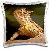 Texas Horned Lizard (Lizards - Texas Horned Lizard, Rio Grande Valley, Texas 16x16 inch Pillow Case)