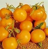 SeeKay Tomato 'Golden Sunrise' 25 seeds