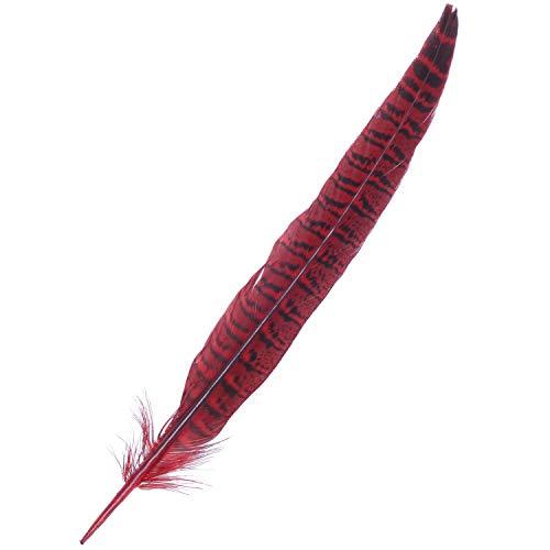 Feder Kostüm Schwanz - ACAMPTAR Beautiful Hahn Fasan Schwanz Federn 12-14 Zoll Lang Kostüm Dekor Millinery Farbe: Rot Menge: 10 Stück