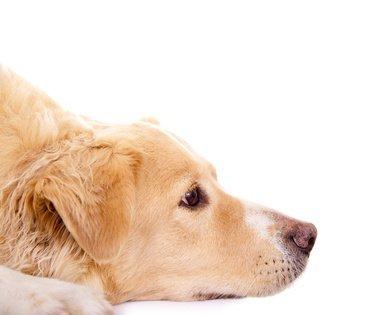 AniForte B.A.R.F. Line No10 Flockenmix 5 kg Hundeflocken Gemüse Biofutter- Naturprodukt für Hunde - 6