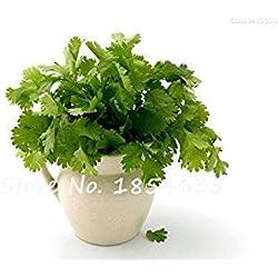 Vista Bonsai Koriander Koriander Samen Hausgarten Bio-Gemüse duftenden essbaren Kümmel Geschmack köstliche Kochen 100 Stücke