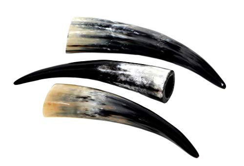 Brillibrum Design 1 Stück Edle Kuhhörner/Stier-Hörner von 20 bis 90 cm - Tolle Trophäe Trinkhorn Poliert Robust Klein Bis XXL Watussi Kuh-Horn Unikat (Länge 20cm - 30cm)