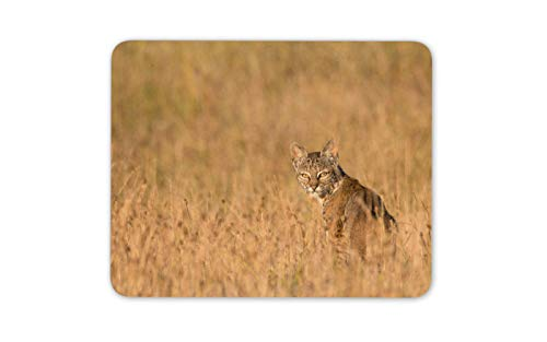 Bobcat Lynx Mauspad Pad - wilde Katze Tier Leopard Cheetah Gift-Computer # 14241 - Bobcat Lynx