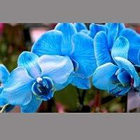 Visa Store NF564xT2: 2018 Nouveautés !!24 tipos de fondos de floración de orquídeas Phalaenopsis pour votre choix - (Couleur NF564xT2)