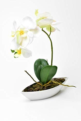 FIDEO Künstliche Orchidee Phalaenopsis in Schale Weiß Creme 30cm 1 Rispe im Topf wie echt klein