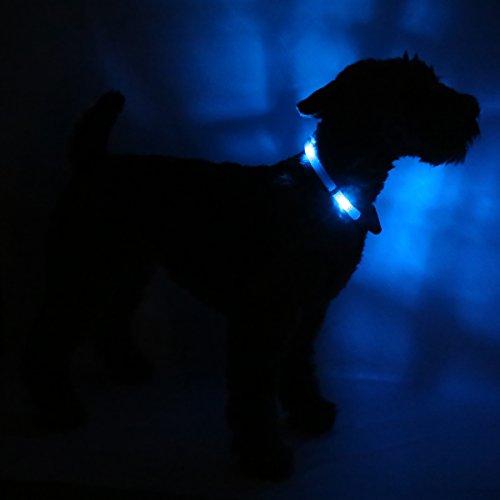 LED Leuchthalsband LEUCHTIE® Plus blau Größe 50 neues Verschlusssystem - 2