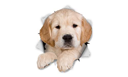Winston & Bear Adesivi da Parete Cucciolo Golden Retriever - Adesivi Cani 3D da Riporto - 2 Confezioni - Frigorifero - Bagno - Camera - Automobile - Vendita al Dettaglio