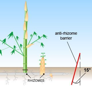 root-barrier-for-bamboo-stop-roots-and-rhizomes-with-root-control-barrier-heavy-duty-length-5m-depth