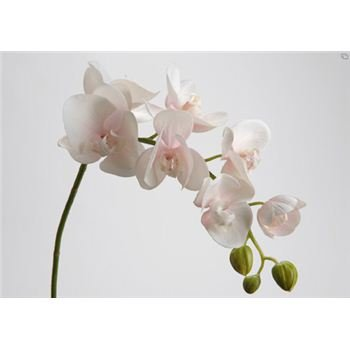 Gd Bo Balcons - Orchidée Artificielle - 75Cm