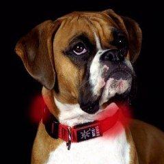 Nize Ize Collier lumineux pour chien Taille S 25-33cm