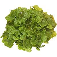 Obst & Gemüse Bio Salat Eichblatt rot/grün (1 x 1 Stk)