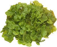 amorebio Bio Salat Eichblatt rot/grün (1 x 1 Stk)