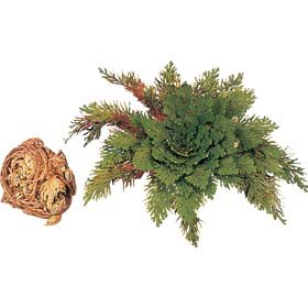 tobar-02553-resurrection-plant