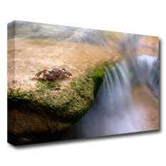 Crabe d'eau douce (potamon Fluviatile) par un Str–76,2x 50,8cm Impression sur toile–Encadrée et Prête à Accrocher