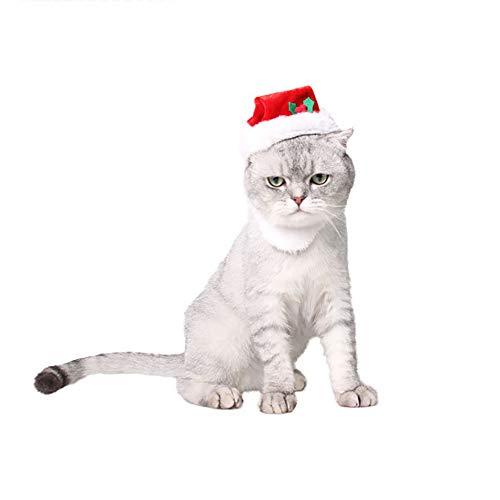 PET HOUND Katzen...