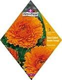 Royal Fleur - Semillas calendula esterel doble naranja 1cor