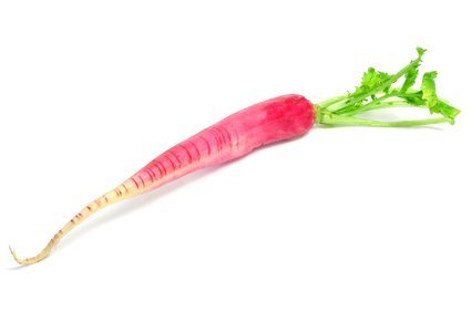 Fruchtknall Rettich rot 2 Bund