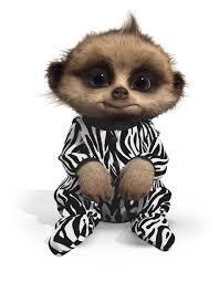 Image of Safari Oleg Limited Edition Compare the Meerkat