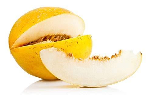 Fash Lady CASABA MELON SEEDS GOLDEN COULEUR FRUITS DOUCE VITAMINE C NAVIRES BIEN 9 / PK