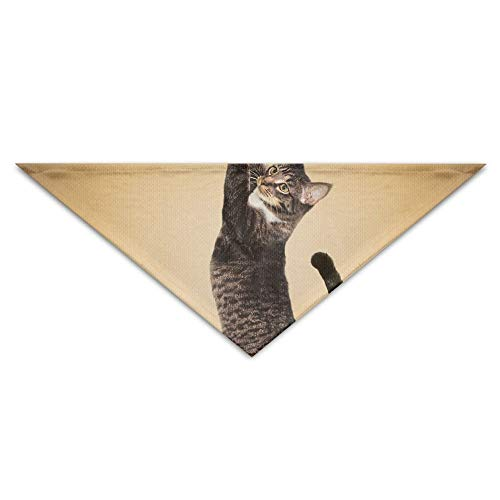 Gxdchfj Yoga Cat Turban Triangle Scarf Bib Scarf Accessories Pet Cat and Baby Puppy Saliva Dog Towel -