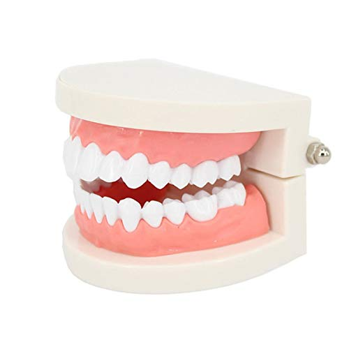 Faneli 1pc PVC Zahnpflege Modell Zahnarzt Adult Teeth Standard Lehrmodell, Zahnmodell Zahnmodell Standard Dental Lehrstudie Typodont Demonstration Tool -