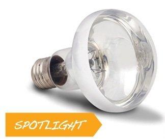 Arcadia Reflektorlampe 50 Watt Spot E27 Reptilien Basking Solar UVA Terrarium Vivarium -