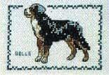 Kit point de croix Motif chien bouvier bernois