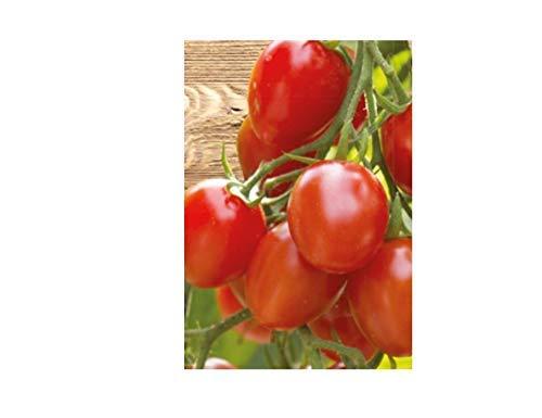 10x Tomate Romello F1 - Alte Sorten Samen Salat Gemüse Salat Saatgut K137