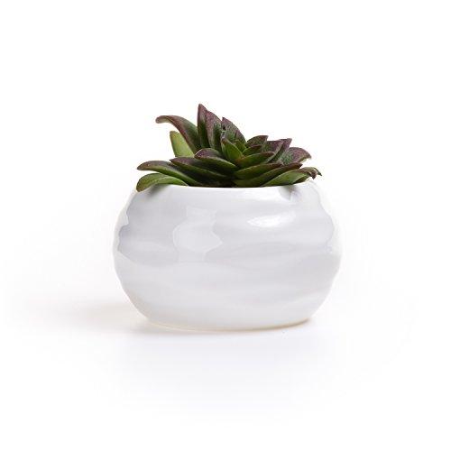 t4u-blanco-pastilla-patrn-cermicos-planta-maceta-suculento-cactus-planta-maceta-planta-contenedor-vi