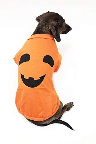 Midlee Kürbisgesicht, Hundekostüm, - Nicht Dumm Kostüm