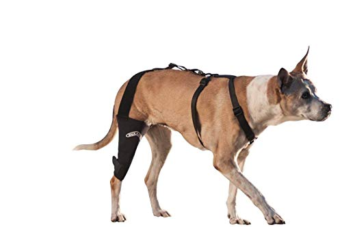 """WalkAbout Canine Knieorthese 3Mm Neopren-Stützhülse med/Large 12-13\"""" linkes Bein"""