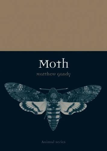 moth-animal