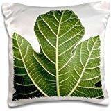 henrik-lehnerer-designs-nature-close-up-of-a-green-fig-leave-on-white-background-fruit-ingredient-ju