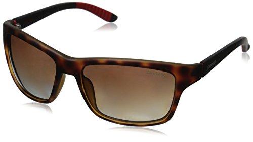 carrera-8013-s-gafas-de-sol-06-x-v-havana-negro-58-17-125