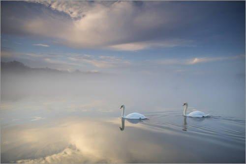 Leinwandbild 30 x 20 cm: Schwäne schweben in einem Traum von Alex Saberi - fertiges Wandbild, Bild auf Keilrahmen, Fertigbild auf echter Leinwand, Leinwanddruck (Bilder Von Alex)