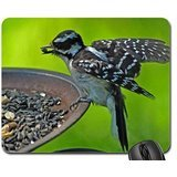 downy-woodpecker-eating-seed-mouse-pad-mousepad-birds-mouse-pad