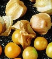 200-ground-cherry-physalis-pubescens-golden-strawberry-chinese-lantern-vegetable-seeds-comb-s-h-by-s