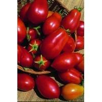 kings-seeds-tomato-san-marzano-red-plum