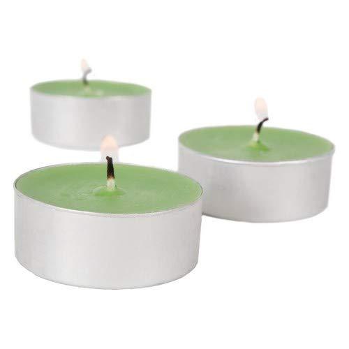 DII Home Traditions Duft-Teelichter, 36 Stück, für Zuhause, Hochzeit, Party, Urlaub, Spa & Aromatherapie, immergrün Tealights Eucalyptus Spearmint