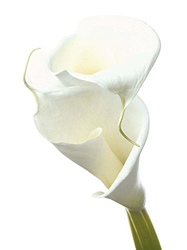 editions-braun-w04080-prisma-lily-in-bloom-ii-poster-papier-weiss-40-x-50-x-005-cm