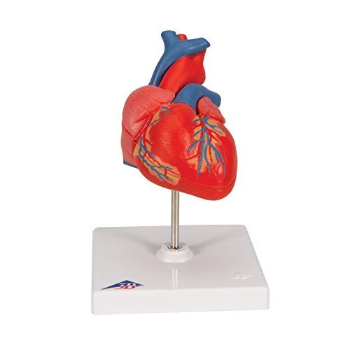 3B Scientific Fournitures médicales professionnelles