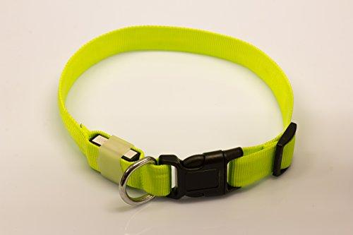 LED Leuchthalsband Basic 1 per USB aufladbar, Größe S, Grün