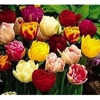 "100 Bulbi di tulipani doppi""In Mix""- Bulbi da fiore - SPEDIZIONE GRATUITA"