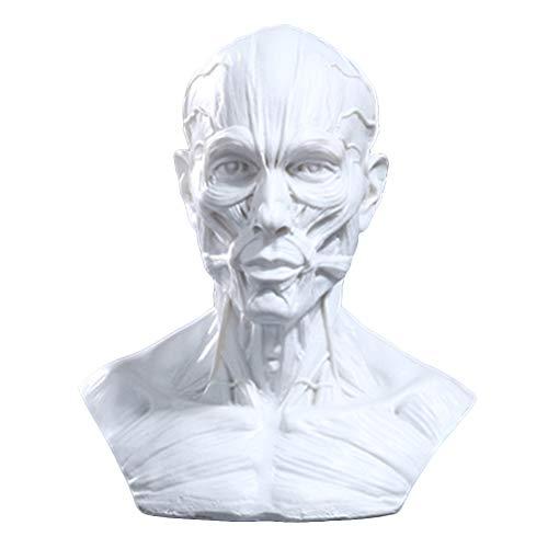 Tête de Mort en résine Humaine 1:1 modèle de résine décoration de Bureau Articles d'ameublement.