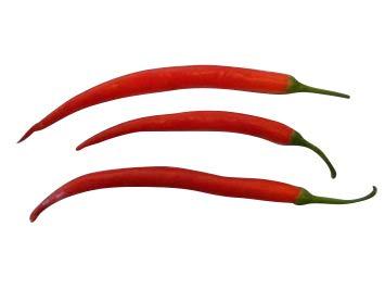 Cayenne Rot 10 Samen (Eine der bekanntesten Chili's der Welt)