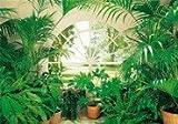 Fototapete Wintergarten, 366x254cm, weisses Fenster, Park, Garten, Palmen und Pflanzen